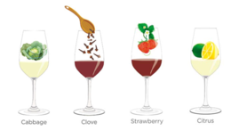 Tasting notes decoded: Cabbage, clove, strawberry, citrus