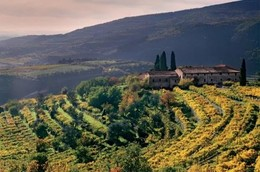 The changing styles of Valpolicella: Fresh vs dried grapes