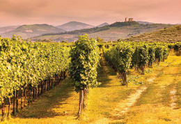 Tenuta Sant'Antonio Getting to the heart of the Valpolicella