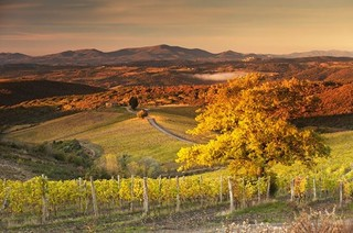 The Tuscany wine quiz – test your knowledge
