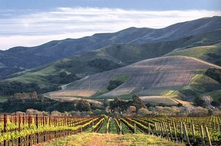 Where to find the best Californian Pinot Noir