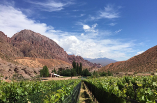 Malbec across the Andes
