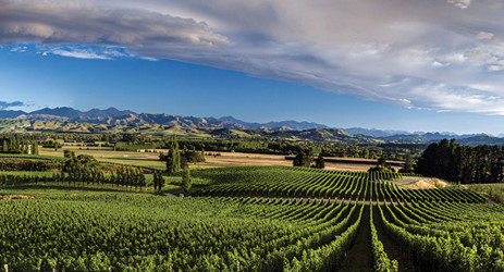 Image: New Zealand, credit Decanter