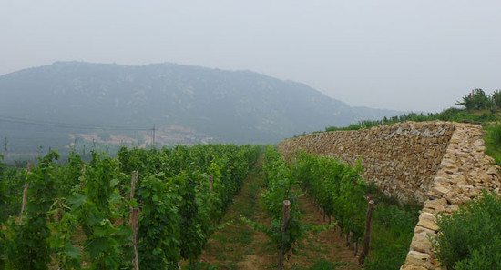 Image: Vineyards in Shandong. Credit: Li Demei