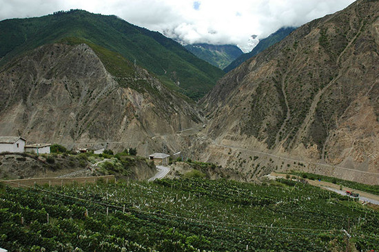 Image: Vineyard in Yunnan, Credit: Li Demei