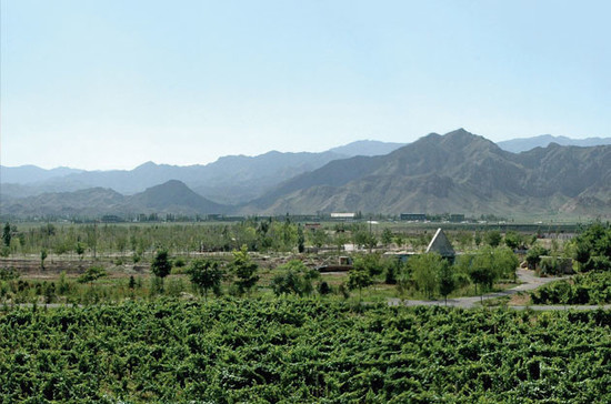 Vineyards in Ningxia