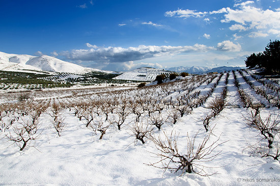 Image: Vineyard in Crete, credit Nikos Somarakis