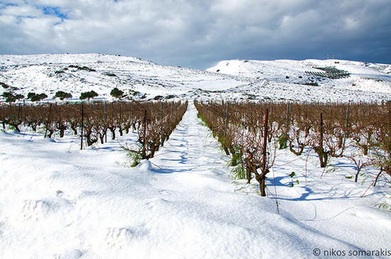 Image: Kaminia vineyards in Crete, credit Nikos Somarakis
