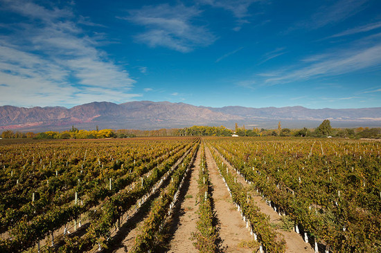Image: Vineyards in Cafayate, Argentina, credit Decanter