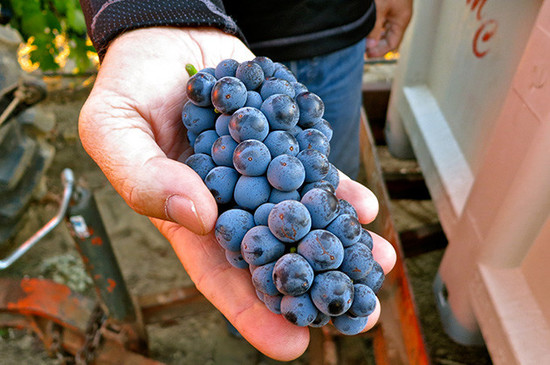 Image: Zinfandel, credit Decanter