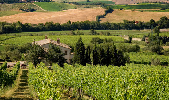 Image: Brunello di Montalcino, Italy. Credit: Decanter