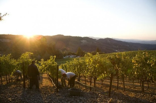 Image: Napa Valley harvest, credit Decanter