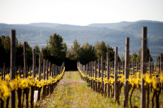 Image: Gramona vineyard