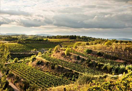 Image: Gramona vineyards, Cava