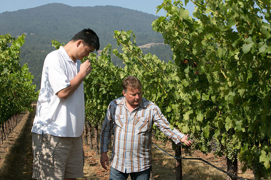 Image: Yao Ming and President Tom Hinde together sampling grapes. Credit: Ed Aiona for Yao Family Wines