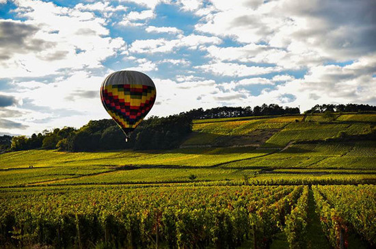 Image: A hot air balloon takes off over Pommard 1er cru Les Rugiens during a lull in harvesting. Credit: Gretchen Greer.