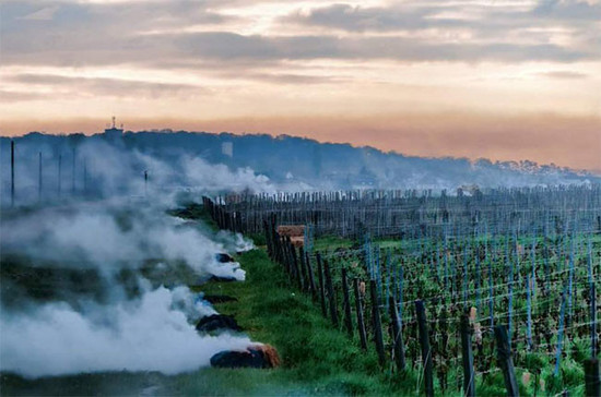 Image: The morning after frost in Burgundy, April 2016. Fires have been lit around vineyards in an effort to keep buds warm. Credit: Frederic Billet / Twitter