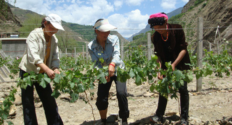 Image: Vineyard in Sichuan, Credit: Li Demei