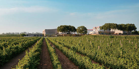 Image: Grace Vineyard, Shanxi