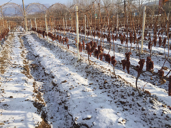 Image: Huanren ice wine region, Northeast China. Credit: Zhan Jicheng