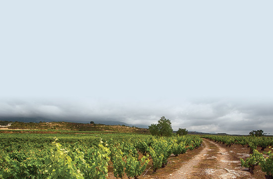 Finca Los Campos vines in Rioja, planted in 1910