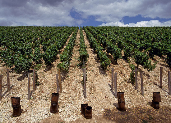 Image: Oil burning smudge pots (to prevent spring frost risk to young buds) on the Kimmeridgian clay soil of the Montmains premier cru
