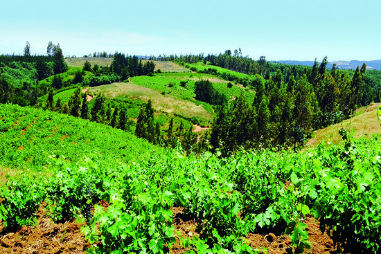 De Martino's Itala vineyard	Credit: Image courtesy of Wines of Chile