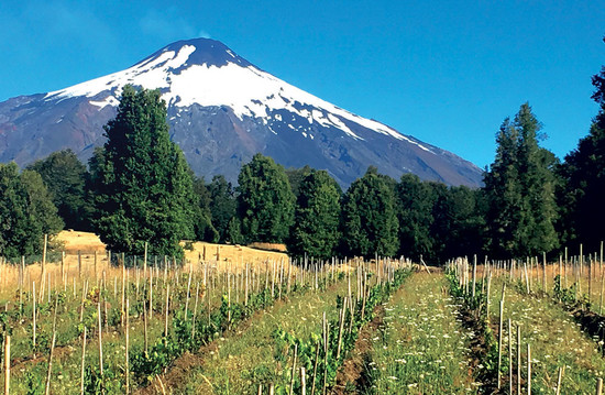 Image: De Martino's Pucon vineyard on the slopes of the Villarrica volcano in Chile's southern Araucanía region at 40°S