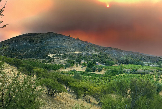Above: severe forest fires were the result of the extreme heat in Chile in early 2017. Here the flames are on the other side of the hills, adjacent to a plot of 200-year-old País vines belonging to Viña González Bastías in the dry lands of Maule. Photographer: Daniela Lorenzo Bürger