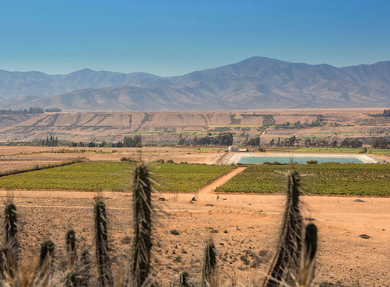 Above: Tara's Atacama vineyard is close to the sea, making it cooler than some parts of Casablanca Valley