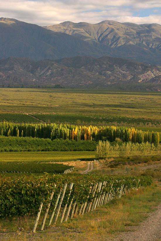 Finca Las Moras: shaking the wine world's status-quo. | Decanter China 醇鉴中国