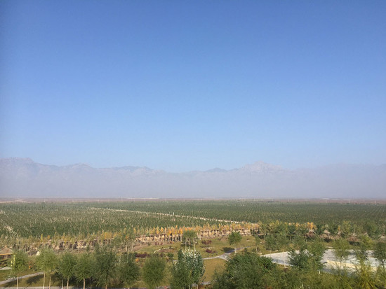 Chateau Mihope vineyards, some of the newest in Ningxia in 2017. Credit: Sylvia Wu