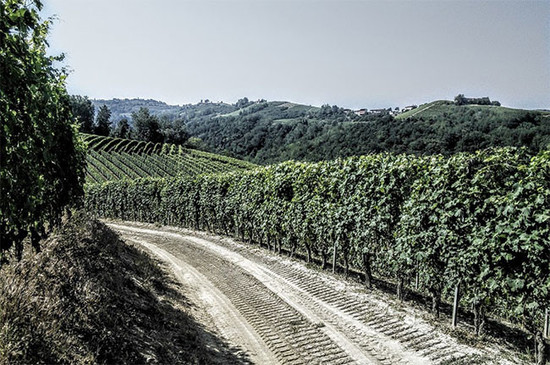 Bricco di Neive vineyards. Credit: Andrew Jefford.