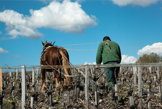 Image: Latour Vineyard from the Latour book © Lothar Baumgarten