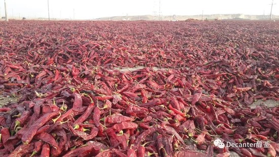 Image: Thanks to sufficient sunshine, Xinjiang is also an important region for producing red peppers, causing increased labour costs in the region. Credit: LI Demei