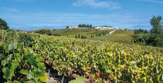 Looking across the vineyards of Casa Santos Lima's Quinta da Boavista