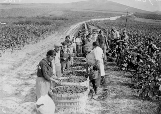 1941: Harvest in Champagne (Moet and Chandon) Getty