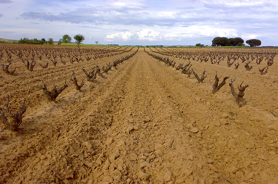 Anguix vineyards, Ribera del Duero