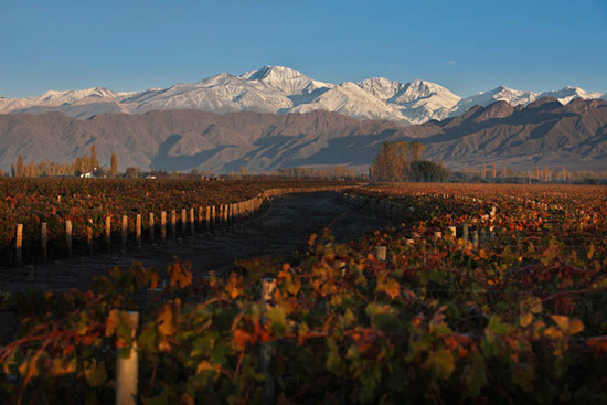 Image credit Wines of Argentina