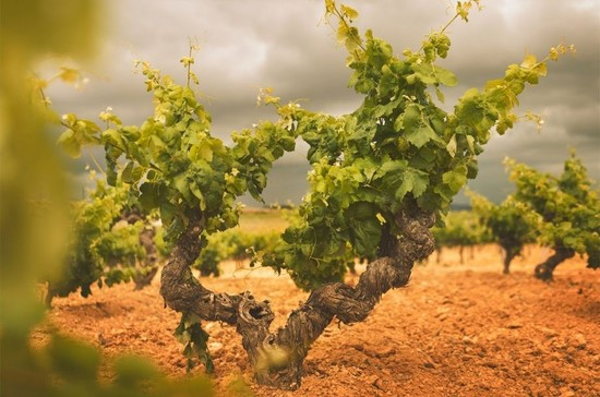 Grape growing and wine production in Utiel-Requena dates from at least the 7th century BC