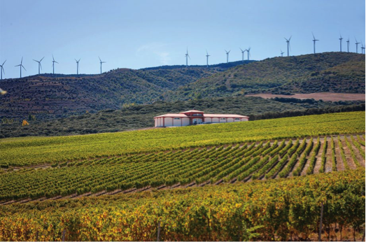 Finca Carbonera: the highest altitude vineyard of the D.O.Ca Rioja