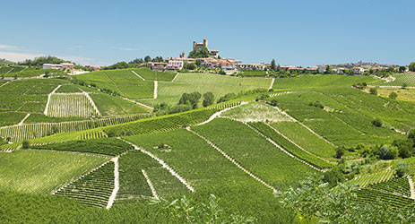 Piemonte, where have you been all my life?