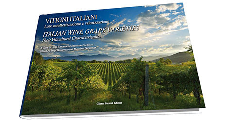 Our guide to learn the difficult Italian wine grapes