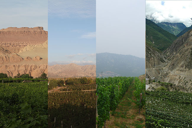 A guide to Chinese wine regions