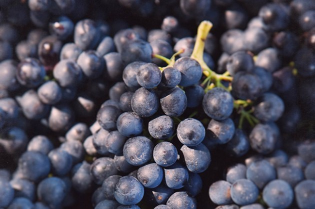 WSET Level 2: Syrah and Shiraz grapes – climatic, winery influence, most important regions