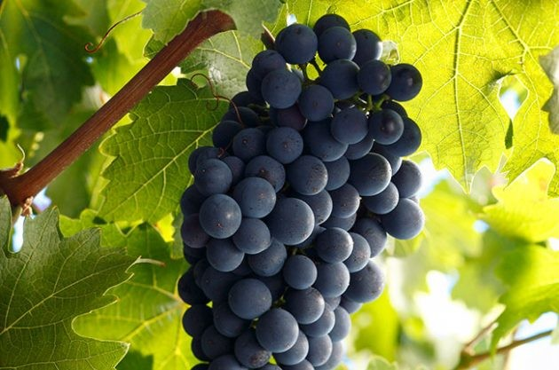 The Cabernet Sauvignon quiz