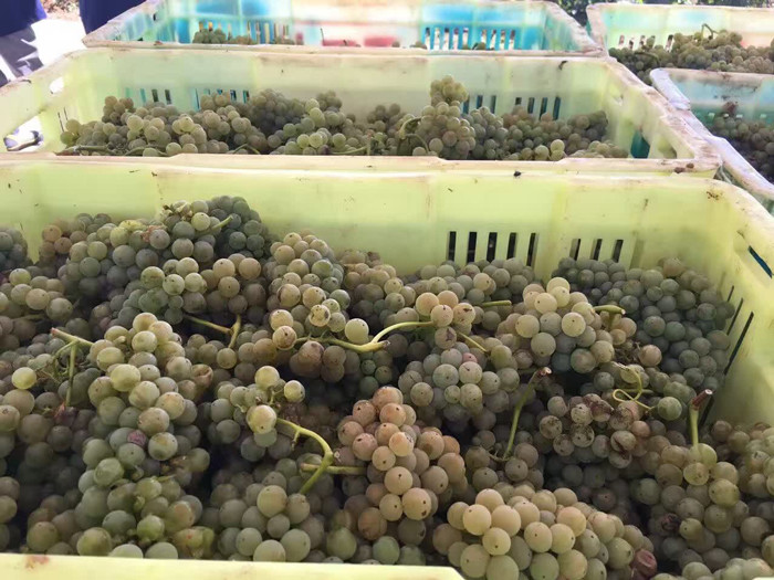 Rot is top concern for Ningxia after vineyard floods