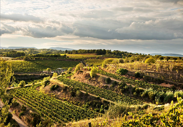 Nine Cava wineries to visit