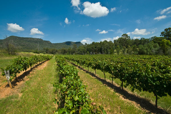 China's Wei Long Grape Wine Co buys Australian vineyards