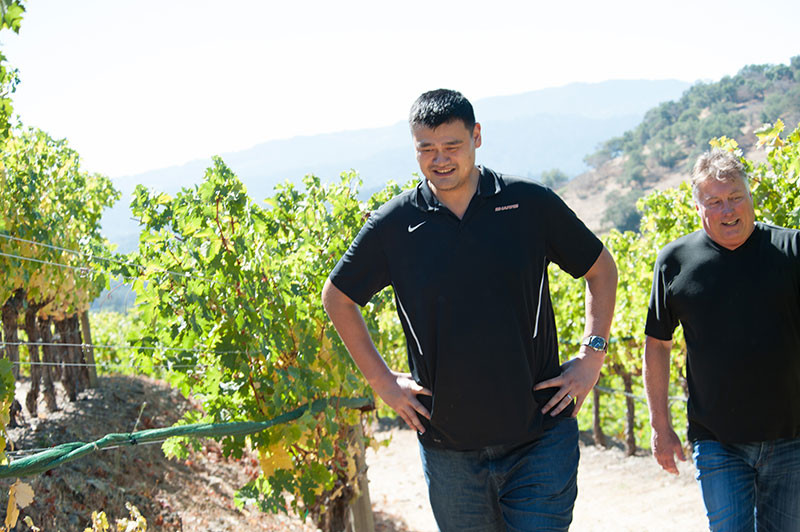 Exclusive: Yao Ming joins 2016 Napa harvest